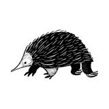 Echidna animal australiano en estilo del garabato Ilustración del vector ilustración del vector