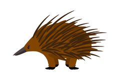 Echidna. Cute vector echidna character on white. Echidna. Cute vector echidna character isolated on white background Stock Photos