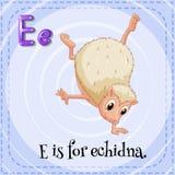 Echidna Royalty Free Stock Photos