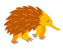 Echidna. Flat cartoon vector illustration Stock Photo