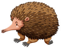 Echidna royalty free illustration