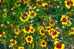 Echinacea στον κήπο Στοκ φωτογραφία με δικαίωμα ελεύθερης χρήσης