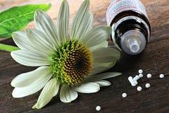 Echinacea 03 Fotografering för Bildbyråer