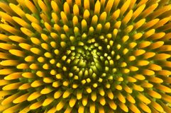 Echinacea. Macro on echinacea Royalty Free Stock Photo