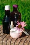 Echinacea alternative medicine Stock Photography