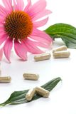 Echinacea capsules Royalty Free Stock Photos