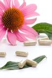 Echinacea capsules Royalty Free Stock Image