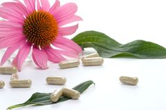 Echinacea capsules. Closeup of Echinacea extract pills and fresh Echinacea flowers best suited for alternative medicine ads. Shalow DOF Stock Image