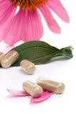 Echinacea capsules Royalty Free Stock Photo