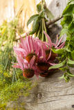Echinacea Stock Photography