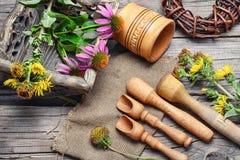 Echinacea e inula curativos Imagens de Stock