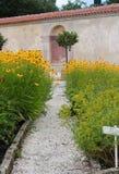 Echinacea flower bed Stock Image