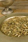 Echinacea infusion Stock Image