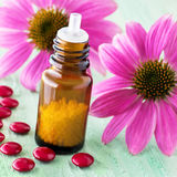 Echinacea - medicine Stock Photo