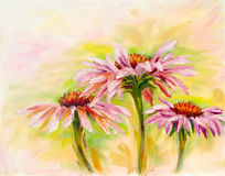 Echinacea olje- målning Arkivbild