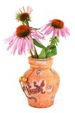 Echinacea purpurea in a clay vase Royalty Free Stock Photography