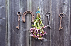 Echinacea purpurea  coneflower bunch, horseshoe and old key on wall. Echinacea purpurea  medical coneflower bunch, rusty horseshoe and old key on wooden wall Royalty Free Stock Photos
