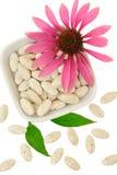 Echinacea purpurea extract pills Royalty Free Stock Images
