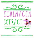 Echinacea purpurea extract VECTOR sketch. Hand drawn packaging label. Pink and green. On white Stock Images