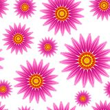Echinacea purpurea flowers vector seamless pattern. stock image