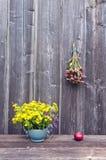 Echinacea purpurea, St. Johns wort flowers and apple Stock Photos
