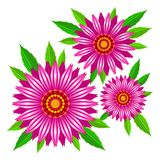 Echinacea purpurea wektoru kwiaty obraz royalty free
