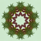 Echinacea Red and Green Kaleidoscope Stock Image