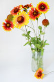 Echinacea red and yellow flowers Stock Photo
