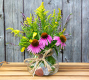 Echinacea and Solidago blossoms. Royalty Free Stock Photo