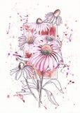 Echinaceabloem op de achtergrond van het kader Stock Foto