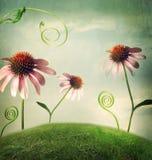 Echinaceabloemen in fantasielandschap Stock Foto