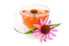 Echinaceate som isoleras på vit bakgrund medicinal tea royaltyfri foto