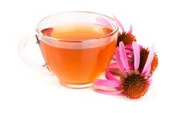 Echinaceathee op witte achtergrond wordt geïsoleerd die Geneeskrachtige thee Stock Afbeelding