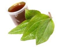Echinachea extrahieren - gesunde Nahrung stockfotos