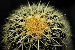 Echinocactus Imagenes de archivo