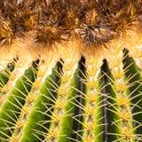 Echinocactus in Jardin de Cactus,  Lanzarote, Canary Islands, Sp Royalty Free Stock Photography