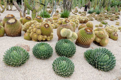 Echinocactus Montjuic Cactus park at Barcelona Stock Photo