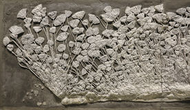 Echinoderm fossil. The close-up of echinoderm fossil. The echinoderm was called Traumatocrinus hsui Stock Photography