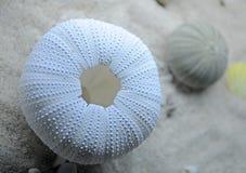 Echinoidea Stock Images