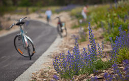 Echium vulgar.GN Wildflower Στοκ φωτογραφία με δικαίωμα ελεύθερης χρήσης