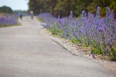 Echium vulgare.GN do Wildflower Fotografia de Stock
