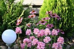 Echniacea -黄金菊和金鱼草属majus -短冷期龙在花圃里 库存照片