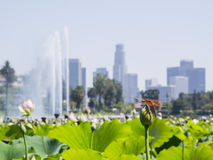 Echo Lake and Los Angeles downtown cityscape Royalty Free Stock Photos