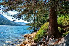 Echo Lake in the Sierras near Tahoe from a spot on the east side. Blue high Sierra lake water while looking through the branches of a conifer tree at a little Stock Photo