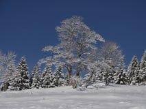Echt Authentiek de Winterlandschap Royalty-vrije Stock Afbeelding
