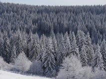 Echt Authentiek de Winterlandschap Stock Afbeeldingen