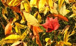 Echt Canadees Autumn Day stock foto