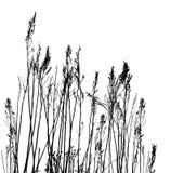 Echt grassilhouet/vector Stock Foto's