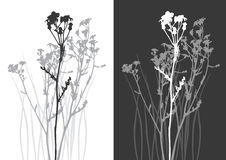 Echt grassilhouet - vector Stock Fotografie