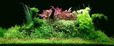 Echte Aquascape in 300 liter aquarium Stock Fotografie